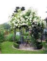 Eisenpavillon Gartenpavillon Rosenpavillon Metallpavillon 260cm